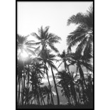 Palm Forest Poster