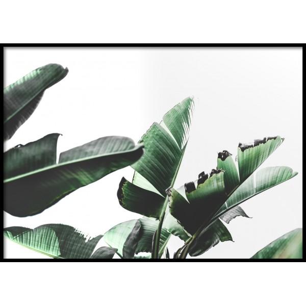 Banana Plant 2.0 Poster