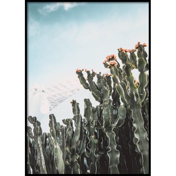 Flowering Cactus Poster