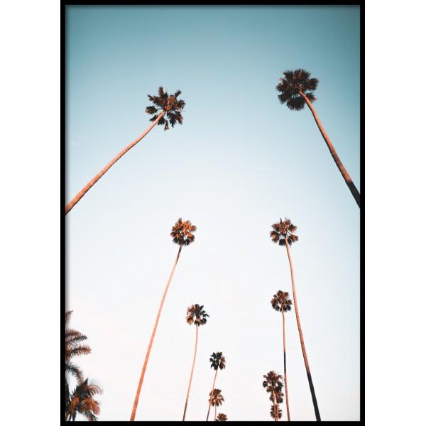 LA Palms Poster