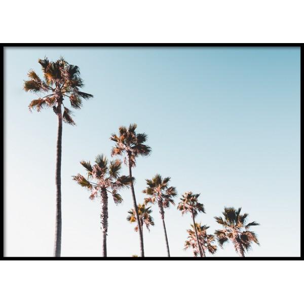 Venice Palms Poster