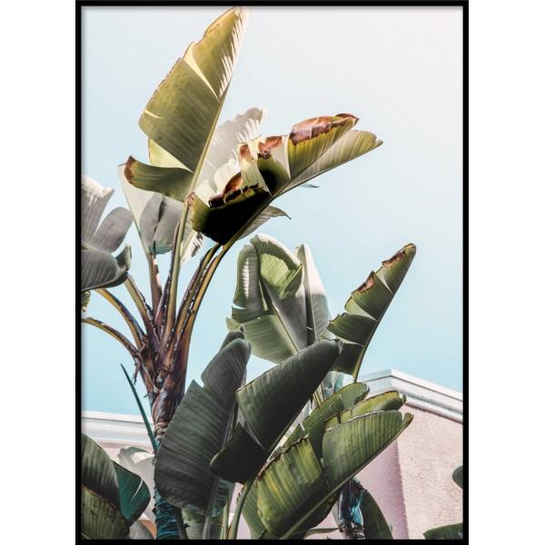 Beverly Banana Tree Poster